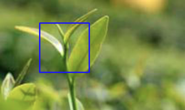 """Taiwanese """"one-tip two-leaf"""" image registration algorithm"""