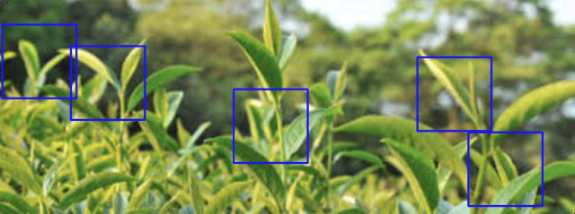 """Taiwanese """"one-tip two-leaf"""" image registration algorithm by LEADERG INC.-1"""